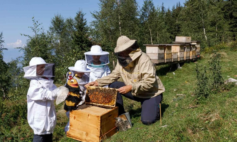 Bienenstock untersuchen mit Biene Line