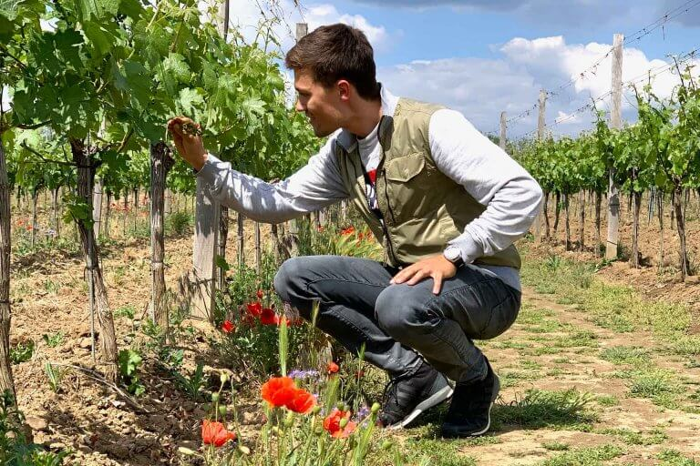 Daniel untersucht Weinrebe