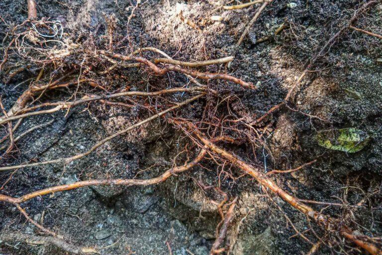 Bodenprofil im Wald