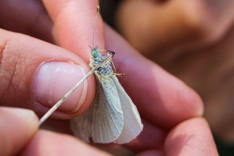Schmetterlingsuntersuchung