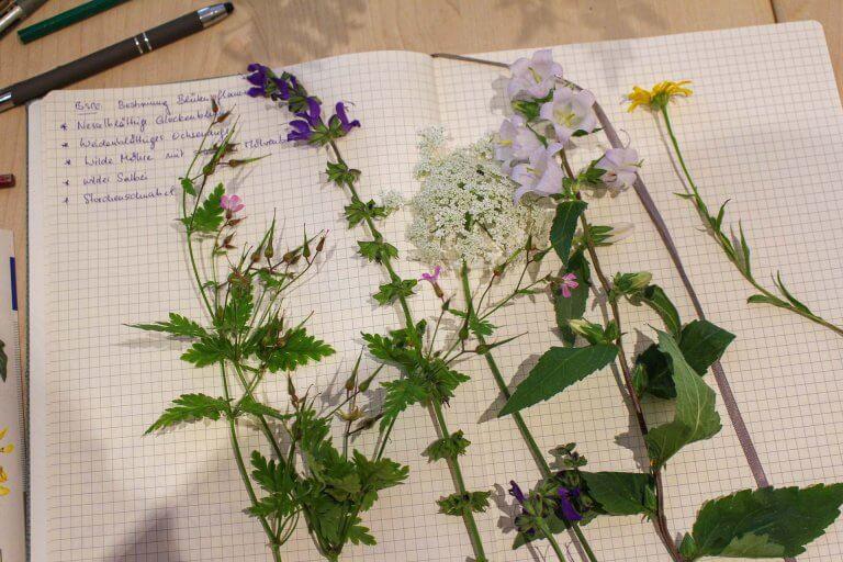 Pflanzen lernen