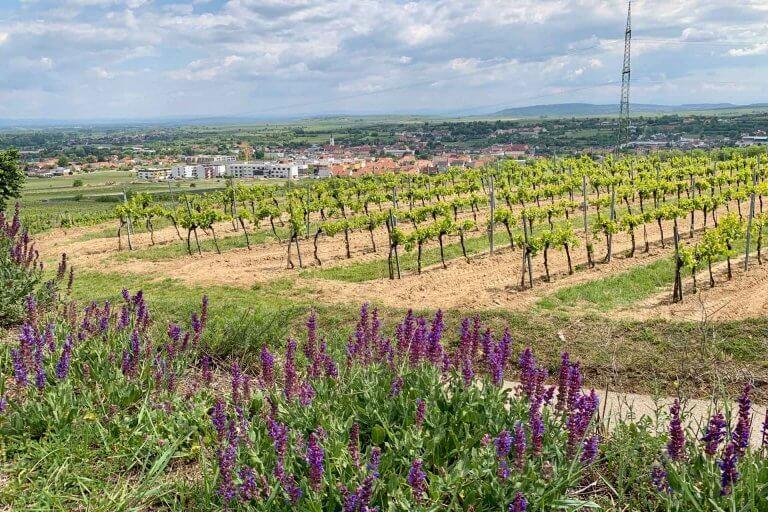 Weinreise Kamptal 1