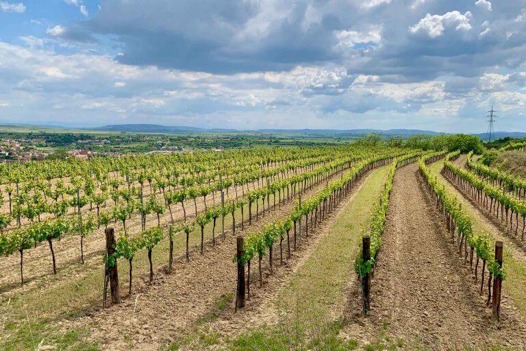 Weinreise Kamptal 2